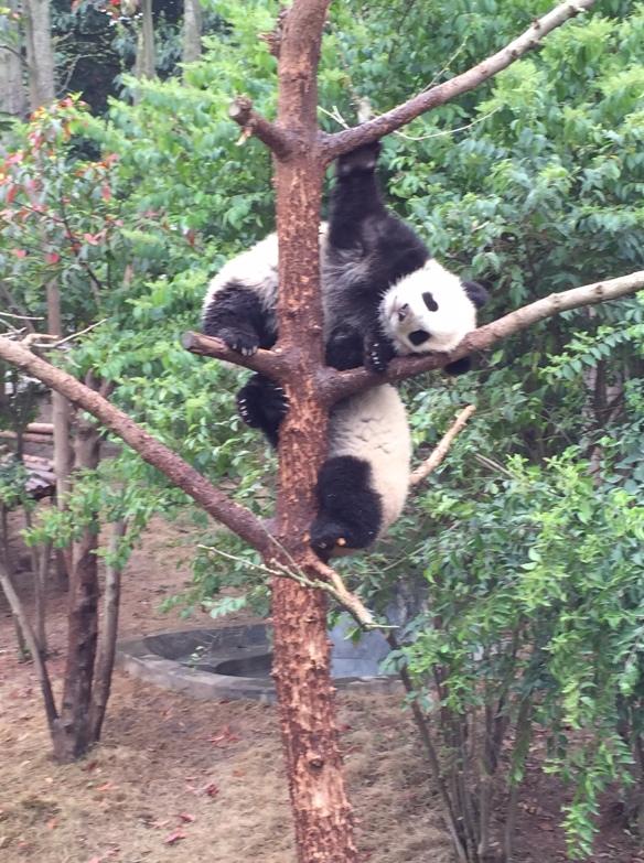 20150402 Panda Base One