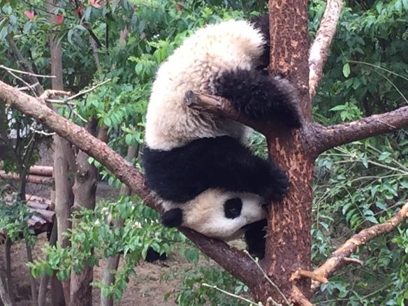 20150402 Panda Base Two